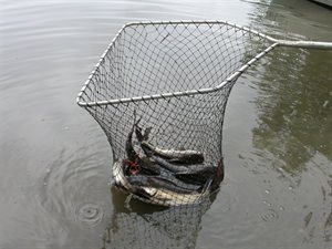 Picture of Intercentre Fishing (11th - 13th September 2021)